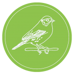LOGO: Savannah Sparrow outlined in white on green background