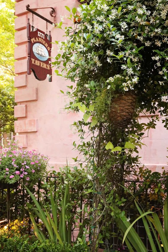 Pink stucco building surrounded by blooming jasmine with a sign pointing to a basement tavern