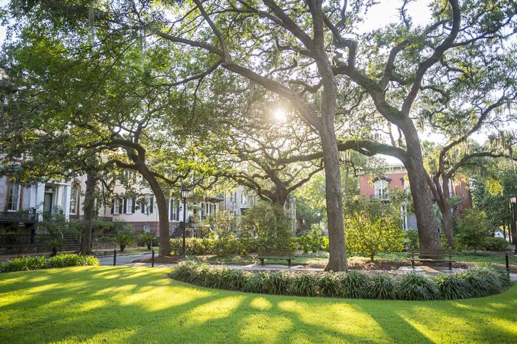 Monterey Square in Savannah with bright green grass and numerous live oaks filtering sunlight through the branches