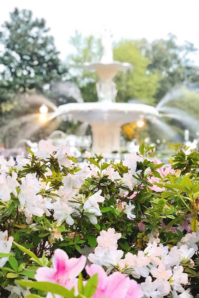 Best time to visit Savannah is spring because you'll find pink and white azaleas blooming in front of Forsyth Fountain