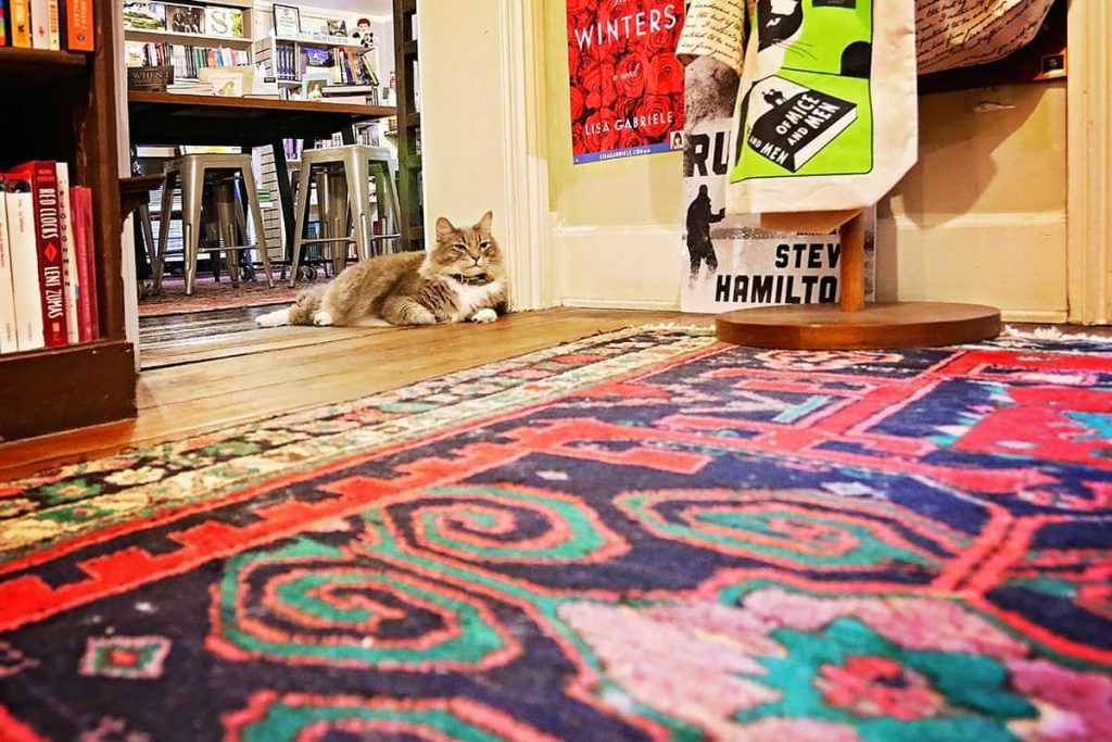 Low-angled shot of the floor of E.Shaver booksellers with a colorful rug and a kitten curled up on the floor
