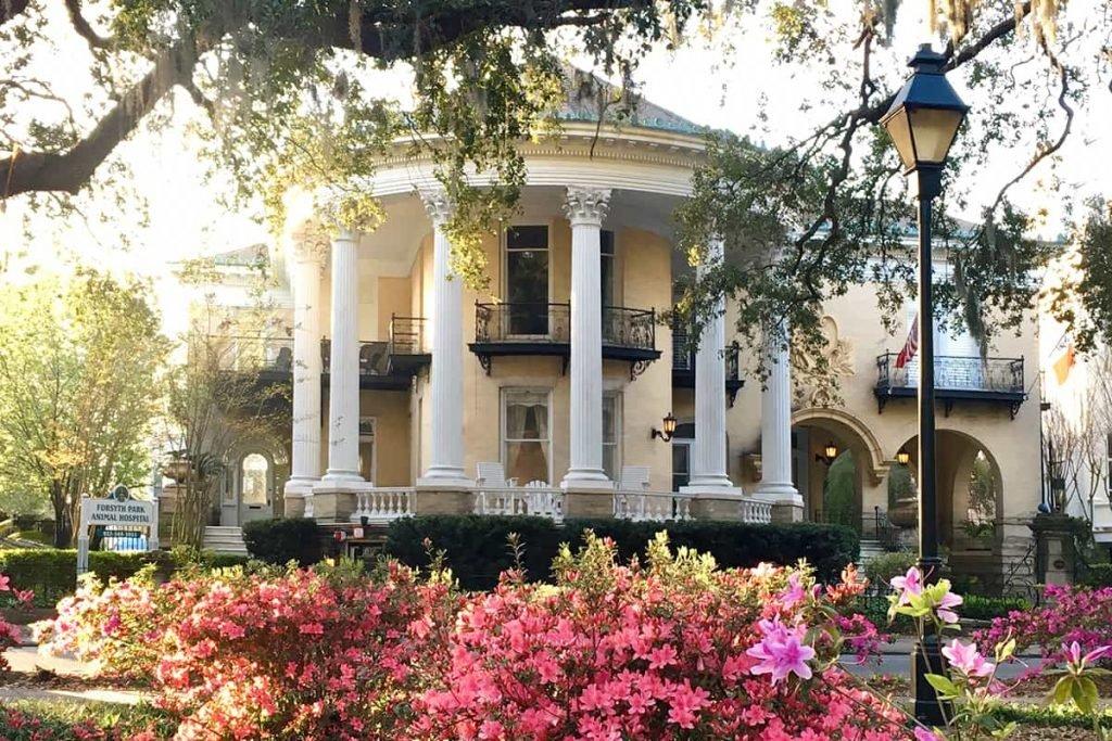 Stately yellow mansion with white columns bordering Forsyth Park in Savannah. Bright pink azaleas and sunlit oaks fill the foreground