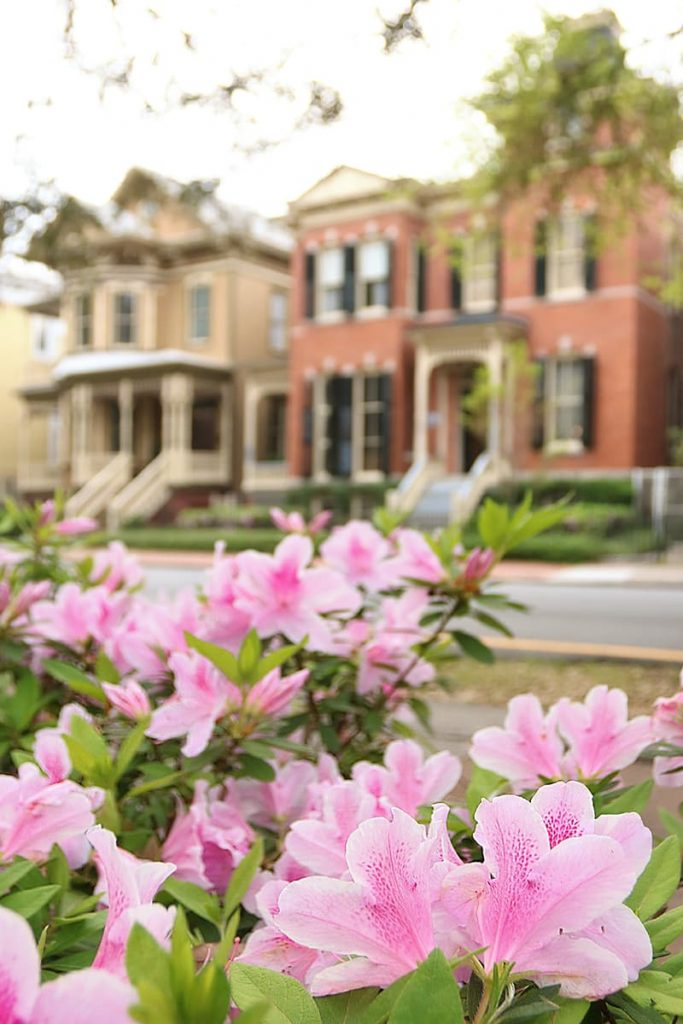 Pink azaleas in the foreground and a row of beautiful historic mansions with detailed front porches in the background