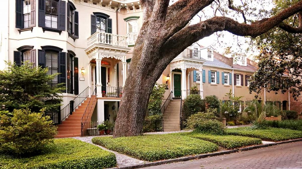 Beautiful historic homes on Jones Street with a giant tree in the foreground and neatly trimmed jasmine covering the ground around it