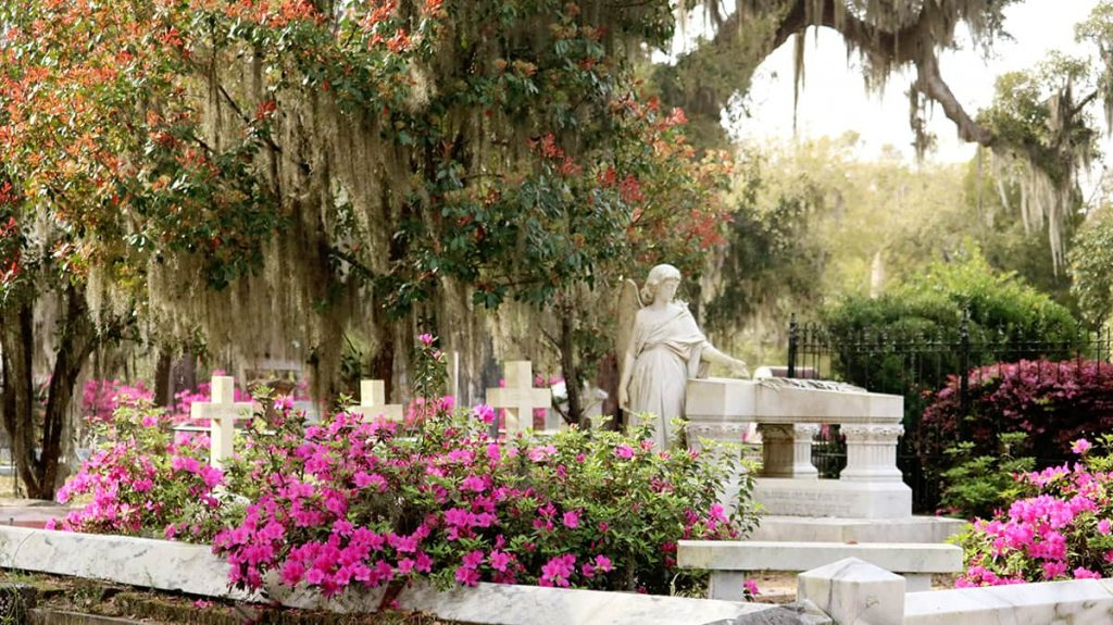 Bonaventure Cemetery scene with pink azaleas, three crosses and an angel with a broken wing headstone, and beautiful trees with Spanish moss as the backdrop