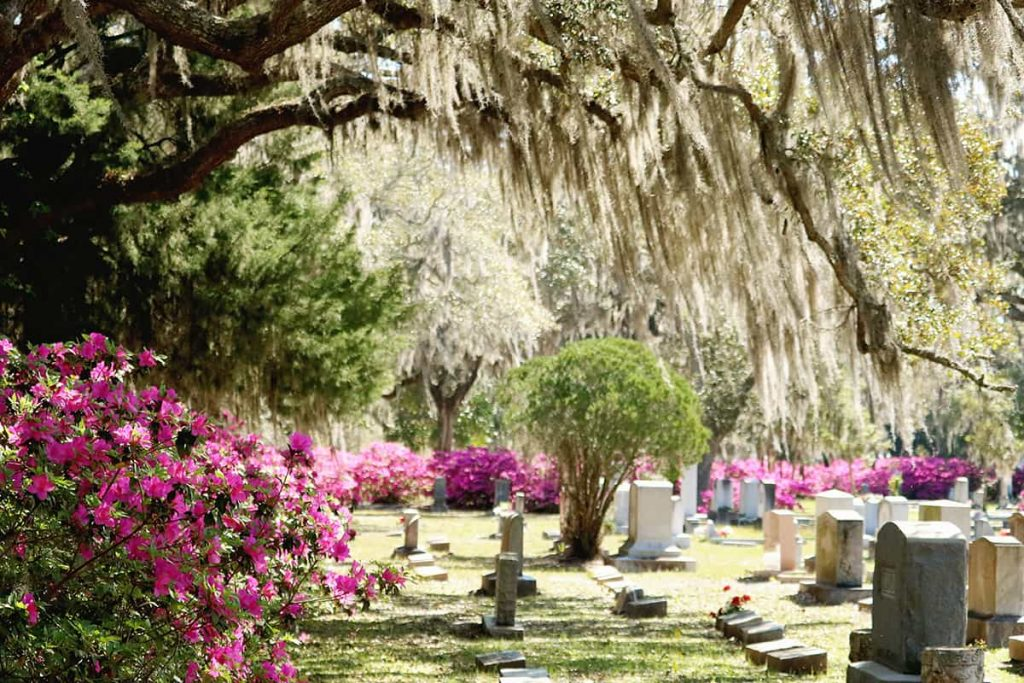 Headstones in Bonaventure Cemetery surrounded by pink azaleas and a canopy of oaks overhead dripping in Spanish moss