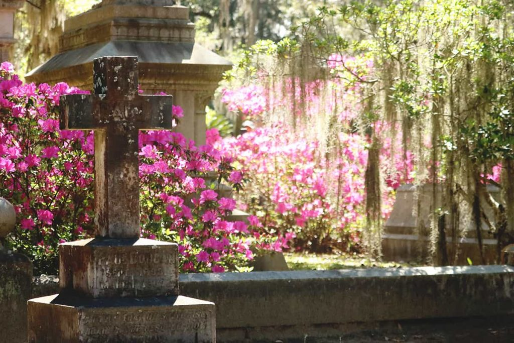 An aged cross headstone with pink azaleas backlit behind it