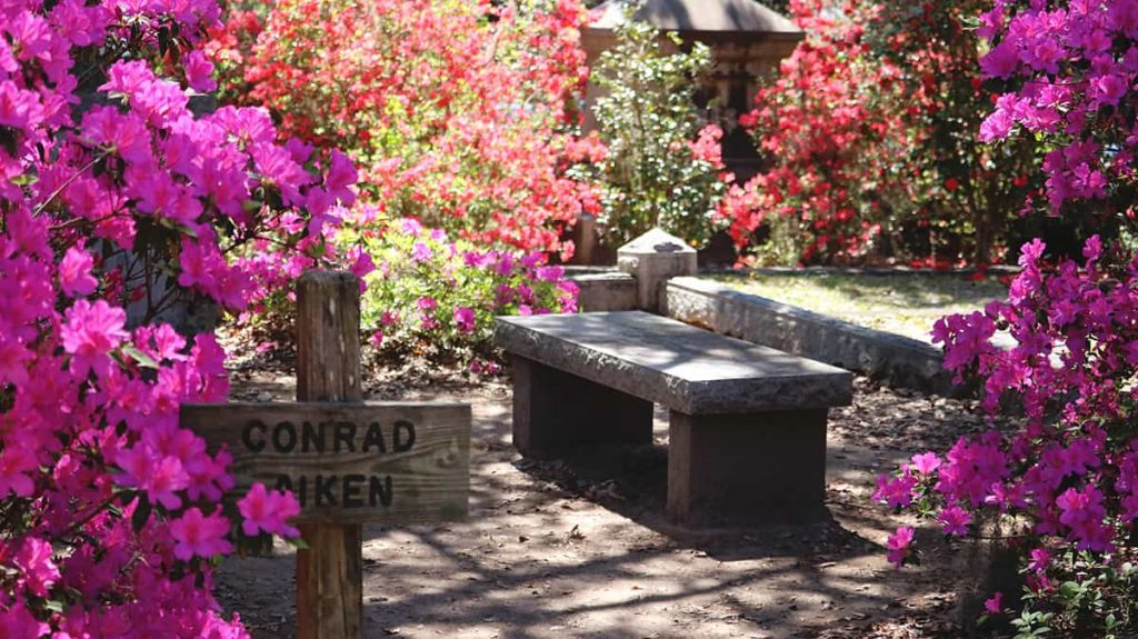 Conrad Aiken sign carved in wood at the entrance to a Bonaventure Cemetery plot surrounded by hot pink azaleas