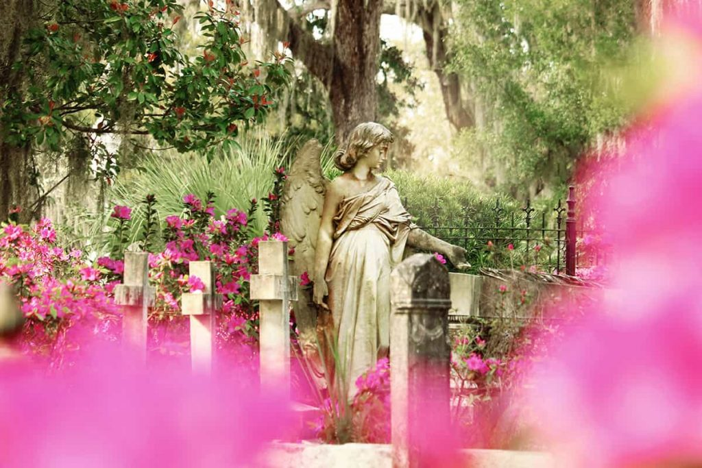 Peering through a curtain of hot pink azaleas at three cross headstones and a beautiful statue of an angel with a broken wing at Bonaventure Cemetery