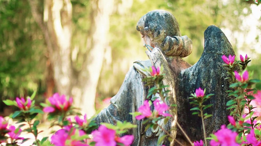 Peering through azaleas at the back of a statue of an angel with a broken wing