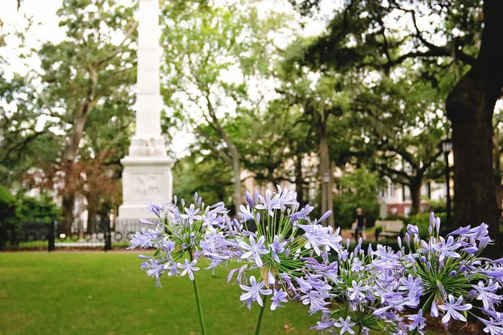 Purple flowers in the foreground and the Pulaski monument in Monterey Square in the background