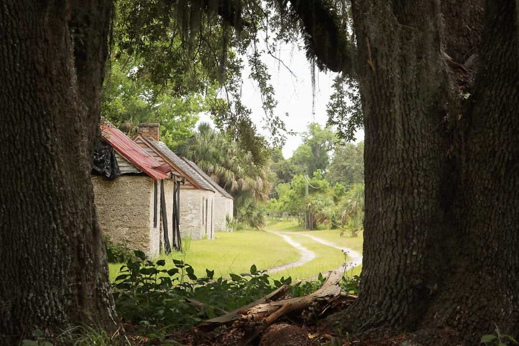 Two massive oaks framing the view of a dirt path and three cabins surrounded by trees on Ossabaw Island