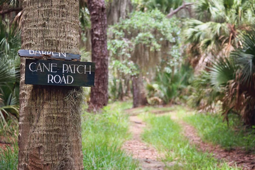 Wooden sign painted black with white text that reads Cane Patch Road, and a dirt path in the background that leads towards a maritime forest on Ossabaw Island