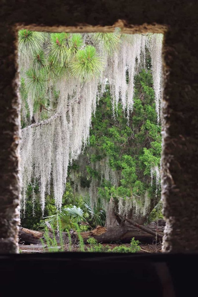 Peering out a tabby-framed window towards a forest of trees dripping in Spanish moss