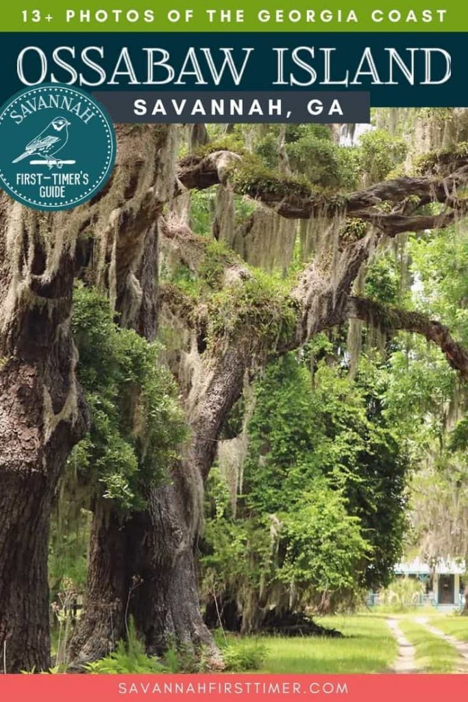 Massive oaks dripping in Spanish moss and covered in resurrection fern and a dirt path leading towards an old home. Text overlay reads 13+ Photos of Ossabaw Island Georgia