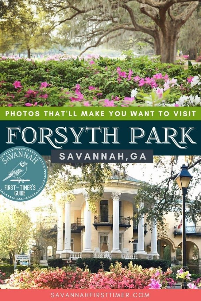 Pinnable graphic of two photos of azaleas in a park setting with text overlay that reads Photos That'll Make You Want to Visit Forsyth Park