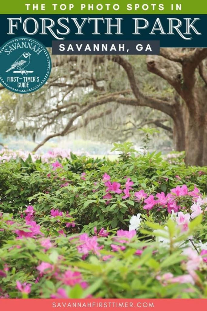 Pinnable graphic of pink and white azaleas with huge oak trees in the background with text overlay that reads The Top Photo Spots in Forsyth Park