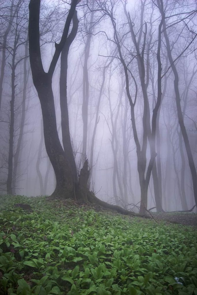 Bright green moss covers the ground in a haunted forest with eerie purple mist in the background