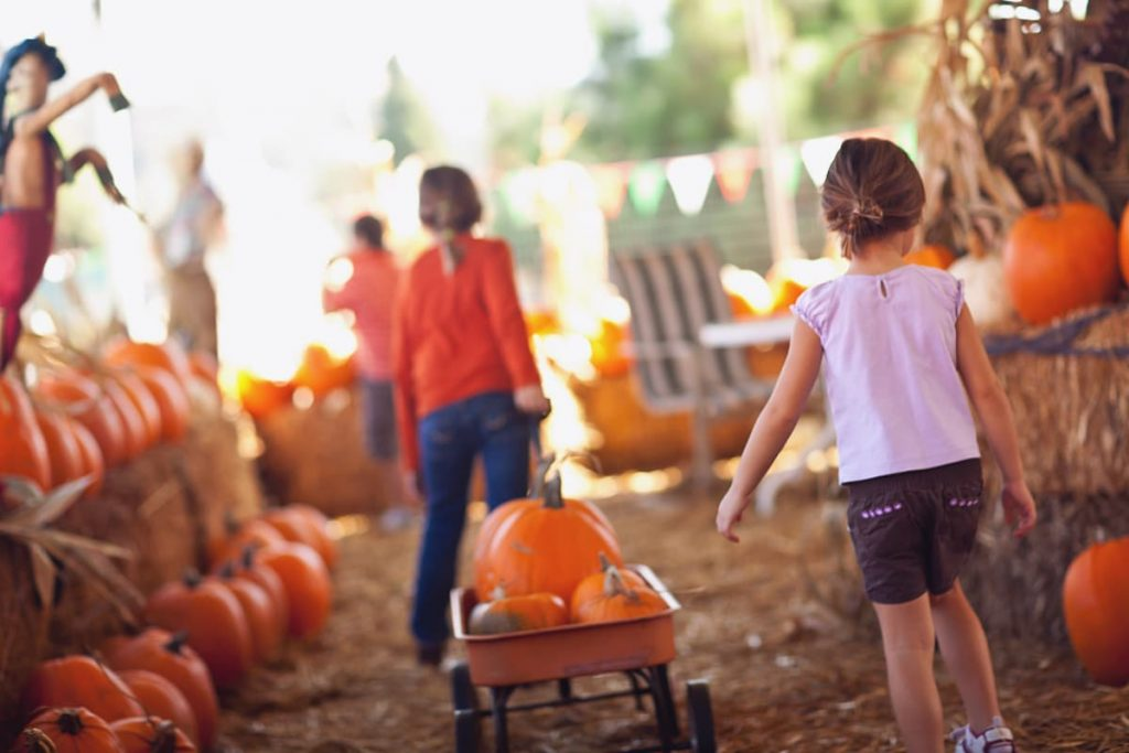 Two young girls in fall attire pull a wagon loaded with pumpkins through a pumpkin patch