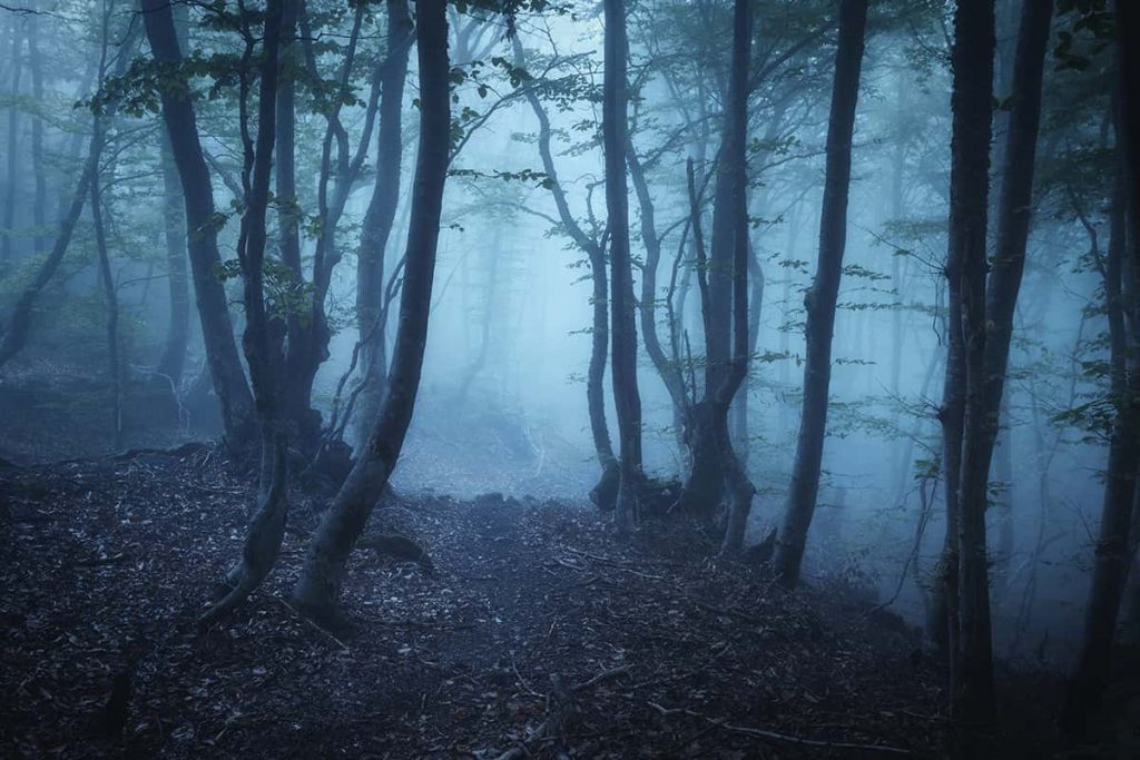 A spooky haunted forest with eerie bluish-toned fog