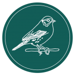 LOGO: Savannah Sparrow outlined in white on teal background
