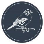 LOGO: Savannah Sparrow outlined in white on navy background